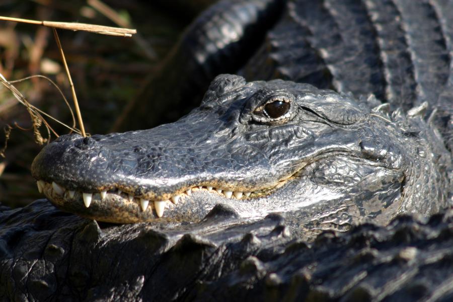 Les Etats Unis Le parc National des everglades
