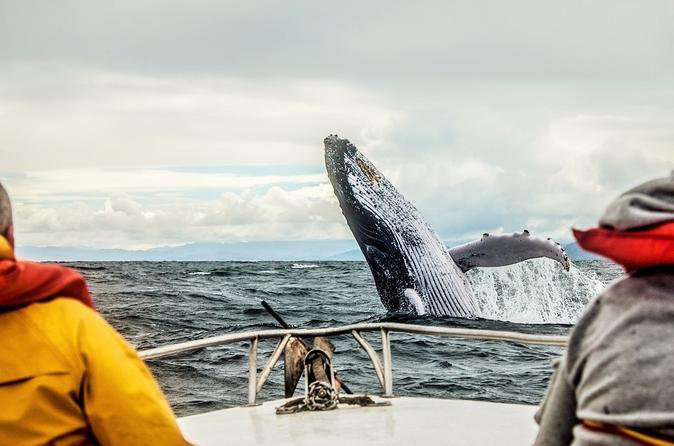 observation des baleines a montreal
